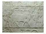 Herdsman Leading a Bull, Detail from Mastaba of Akhethotep, from Saqqara, Old Kingdom, c. 2500 BC Giclee Print