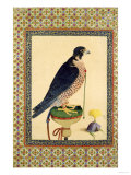 Falcon, from a Moraqqa Giclee Print