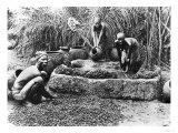 Making Palm Oil in Dahomey,circa 1900 Giclee Print