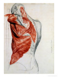 Human Anatomy, Muscles of the Torso and Shoulder Reproduction proc&#233;d&#233; gicl&#233;e par Pierre Jean David d&#39;Angers