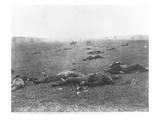 The Harvest of Death, Gettysburg, 1863 (B/W Photo) Giclee Print by Timothy O'Sullivan