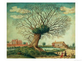 A Pollard Oak Near West Hampnett Place Giclee Print by John Dunstall
