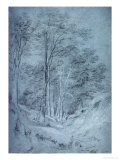 Study of Ash and Other Trees (Pencil on Paper, Heightened with White Chalk) Giclee Print by John Constable