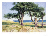Old Olive Trees, Bordighera Giclee Print by Edwin Bale