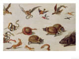 The Enemies of Snakes Giclee Print by Jan van Kessel