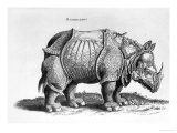 "Rhinocerous, No. 76 from ""Historia Animalium"" by Conrad Gesner (1516-65) Published in July 1815 Premium Giclee Print by Albrecht Dürer"