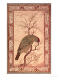 A Barbet (Himalayan Blue-Throated Bird) Jahangir Period, Mughal, 1615 Premium Giclee Print by Ustad Mansur