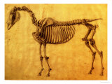 Finished Study for the First Skeletal Table of a Horse, circa 1766 Giclee Print by George Stubbs