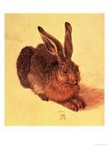 Hare, 1502 Giclee Print by Albrecht Dürer