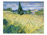 Landscape with Green Corn, 1889 Giclee Print by Vincent van Gogh