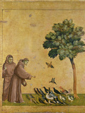 St. Francis of Assisi Preaching to the Birds Giclée-tryk af  Giotto di Bondone