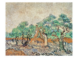 The Olive Grove, 1889 (Oil on Canvas) Giclee Print by Vincent van Gogh