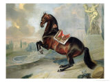 "The Dark Bay Horse ""Valido"" Performing a Levade Movement Giclee Print by Johann Georg de Hamilton"