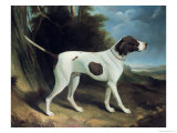 Portrait of a Liver and White Pointer Giclee Print by George Garrard