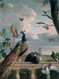 Palace of Amsterdam with Exotic Birds Giclée-tryk af Melchior de Hondecoeter