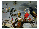 Concert of Birds Giclee Print by Frans Snyders
