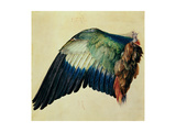 Wing of a Blue Roller, 1512 Reproduction procédé giclée par Albrecht Dürer