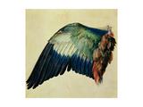 Wing of a Blue Roller, 1512 Giclée-Druck von Albrecht Dürer