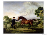 "The Duke of Ancaster's Bay Stallion ""Blank,"" Held by a Groom, circa 1762-5 Giclee Print by George Stubbs"
