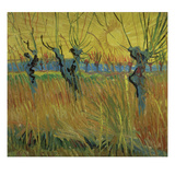 Pollarded Willows and Setting Sun, 1888 (Oil on Card) Giclee Print by Vincent van Gogh