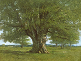 The Oak of Flagey, Called Vercingetorix Giclée-tryk af Gustave Courbet