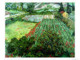 Field of Poppies, Saint-Remy, c.1889 Premium Giclee Print by Vincent van Gogh