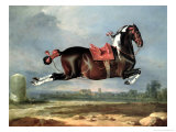 "The Piebald Horse ""Cehero"" Rearing Giclee Print by Johann Georg de Hamilton"