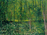 Bois et sous-bois|Woods and Undergrowth, vers 1887 Reproduction proc&#233;d&#233; gicl&#233;e par Vincent van Gogh