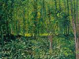 Puita ja aluskasvillisuutta Giclee-vedos tekijänä Vincent van Gogh