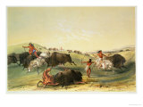 Buffalo Hunt, Plate 7 from Catlin's North American Indian Collection, by Mcgahey, Day and Haghe Giclee Print by George Catlin
