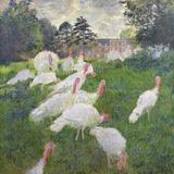 The Turkeys at the Chateau De Rottembourg, Montgeron, 1877 Giclée-tryk af Claude Monet