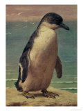 Study of a Penguin Giclee Print by Henry Stacey Marks