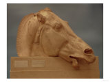 Head of One of the Horses of Selene, Goddess of the Moon, from the East Pediment of the Parthenon Giclee Print