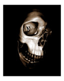 Bone Head Photographic Print by Harveys Photographs