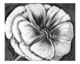 Flower in Black and White Giclee Print by Kim Avent-DiLorenzo