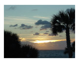 Palm Trees in Sunset Photographic Print by Miska Slock