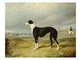A Black and White Greyhound in an Open Landscape, with Hunters and Huntsmen Beyond Giclee Print by John Barwick