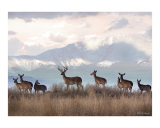 Wild at Heart Photographic Print by Bill Stephens