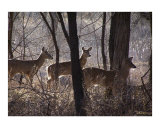 The Gathering Giclee Print by Bill Stephens