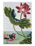 18th Century French Print of Red Water Lily of China II. Reproduction procédé giclée par Stapleton Collection