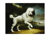 A Standard Poodle in a Coastal Landscape Giclee Print by James Northcote