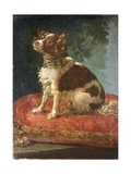 A Spaniel on a Cushion Giclee Print