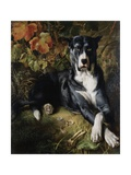 A Brindle Great Dane Giclee Print by Wilhelm Trautschold