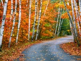 Autumn Trees Lining Country Road Photographic Print by Cindy Kassab