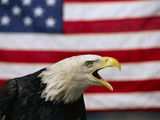Bald Eagle and American Flag Photographic Print by W. Perry Conway
