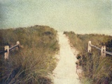Beach Trail Photographic Print by Jennifer Kennard