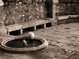 Cat Drinking From a Fountain Photographic Print by Jack Hollingsworth