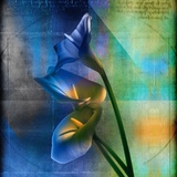 Calla Lilies and Colorful Patterns Photographic Print by Colin Anderson