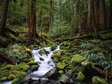 Brook in Sol Duc River Valley Photographic Print