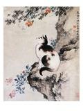 Chat Impression giclée par Shen Quan